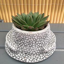 Banc de Gaudí 18 cm amb cactus