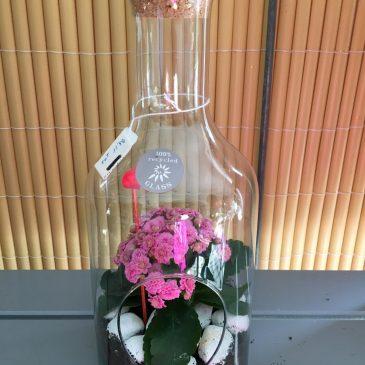 Composició Botella Calanchoe Mini
