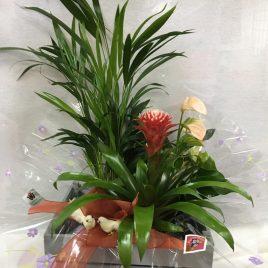 Composicion cesta/cajita con plantas interiores