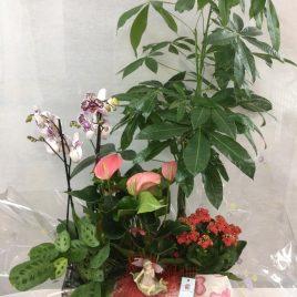 Composició cistella/caixeta amb plantes interior